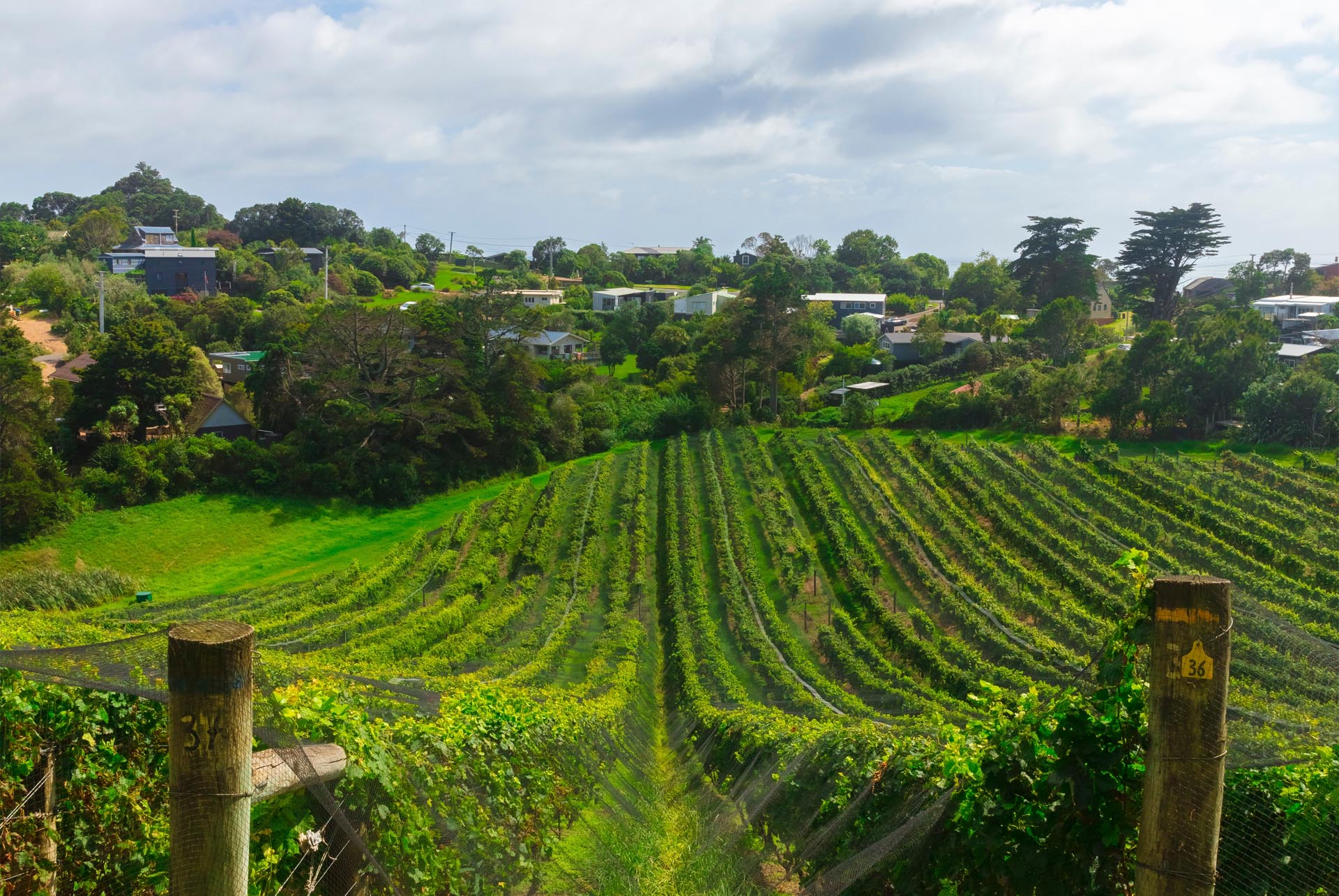 Kumeu Coatesville Riverhead West Auckland