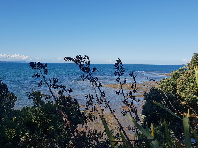 Takapuna Beach Renovation and Extesnion 1