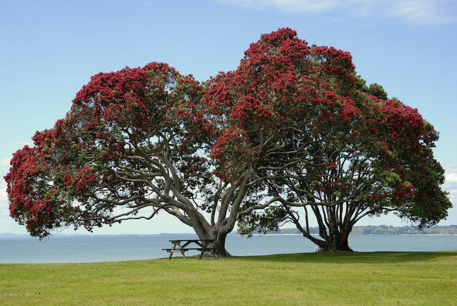 Whangaparoa Red Beach Orewa Stanmore Bay